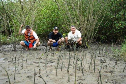Membros do CCC em plantio de propágulos em área de mangue em Cubatão