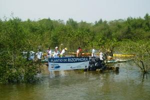 Plantio das rizoforas e concentração do lixo recolhido durante o Canoaço